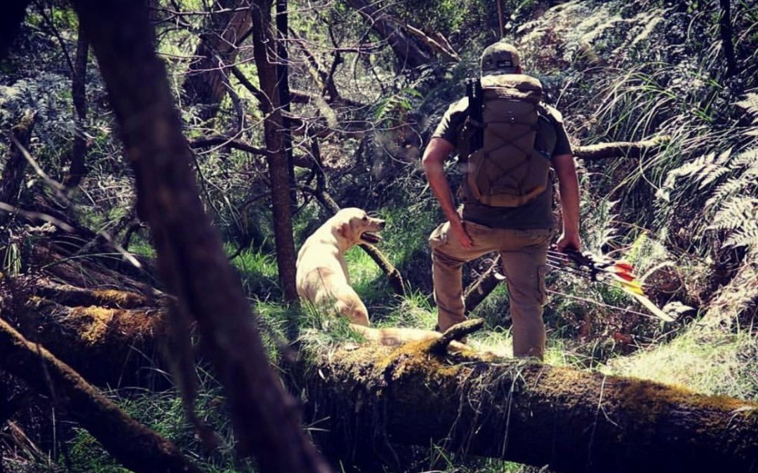 Working Dogs and Hunting with Matt Webb